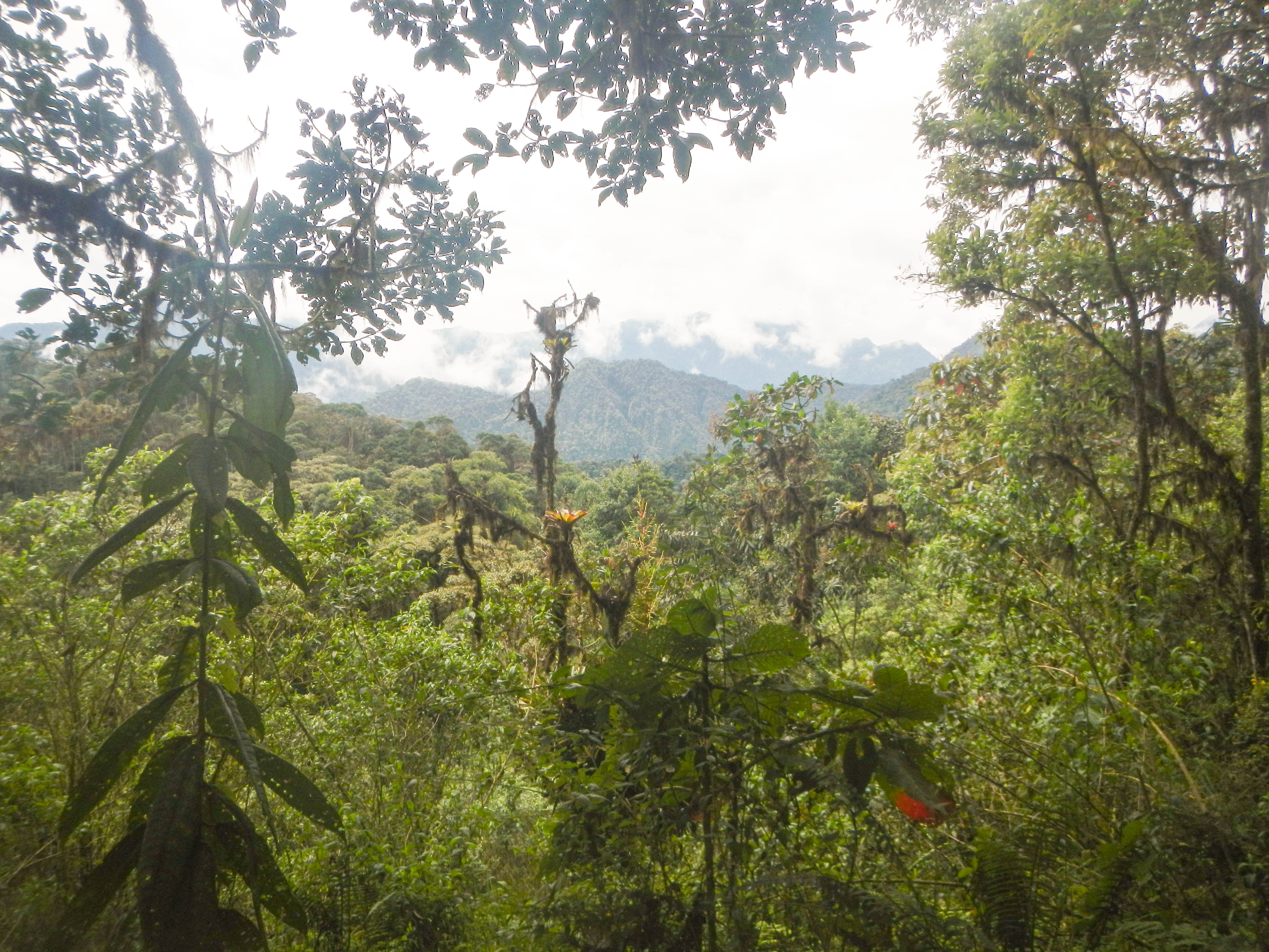 Cloud Forest, Ecuador – May 2013
