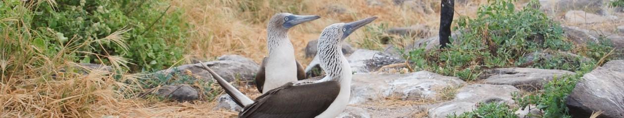 Galapagos – May 2013